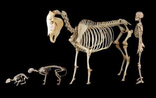 Skeleton Zoo