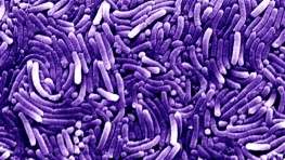 Helicobacter  Pylori - the bacteria swallowed by Morris