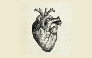 The Heart: Inside and Out