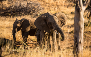 Living With Elephants