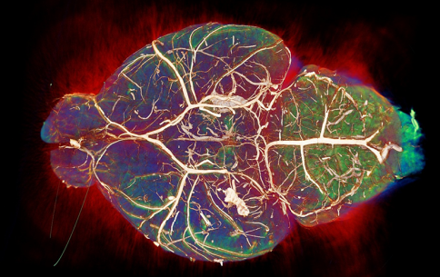 Musical Brain of Guy Barker