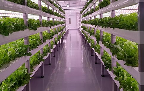 Meals Of Tomorrow: Our Future Food