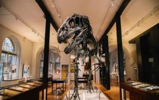 Fantastic Fossils (Credit_ Greg Milner)  (2).jpg