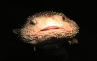 The Ugly Animal Preservation Society .jpg