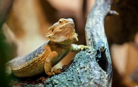 VSI_ Reptiles and Amphibians .jpg