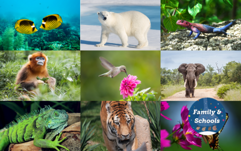 Ridiculous Diversity Of Life On Earth .png